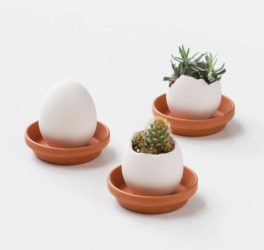 Eggling Plants