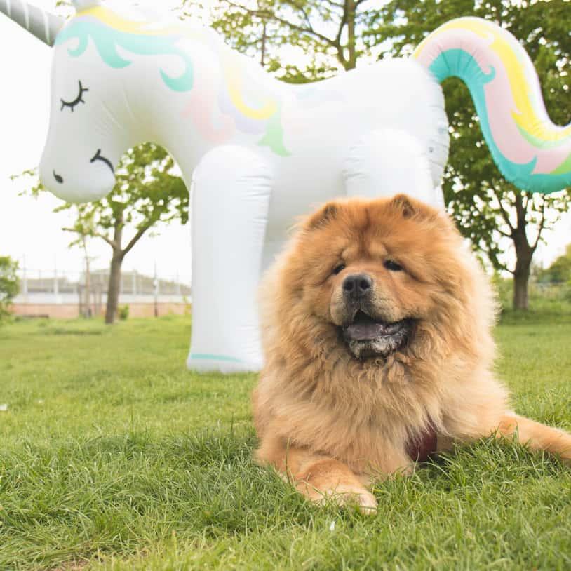 Giant Inflatable Unicorn Sprinkler