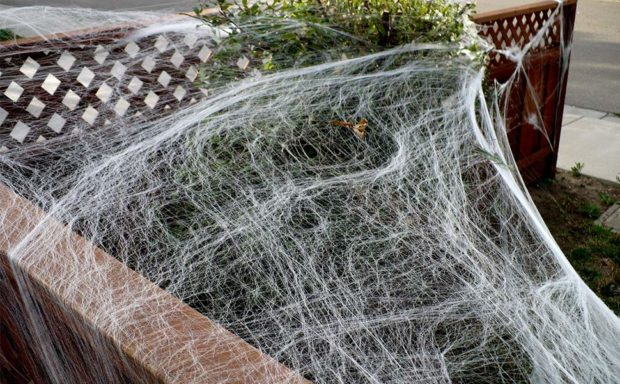 Fake Spider Web