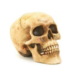 Human Skull Statue