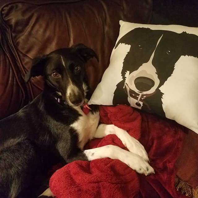 Personalized Pet Portrait Pillow