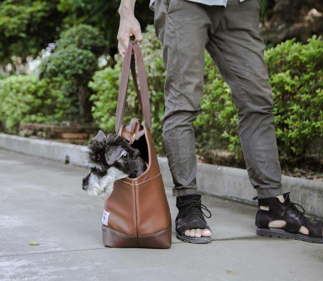 Portable Travel Pet Carrier