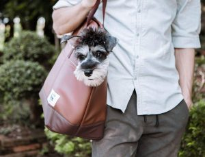Portable Travel Pet Carrier