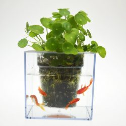 Fish Tank Flower Pot