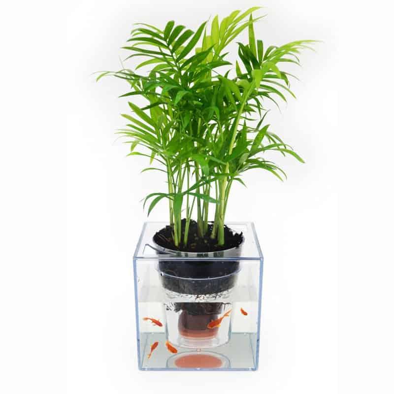 Fish Tank Flower Pot