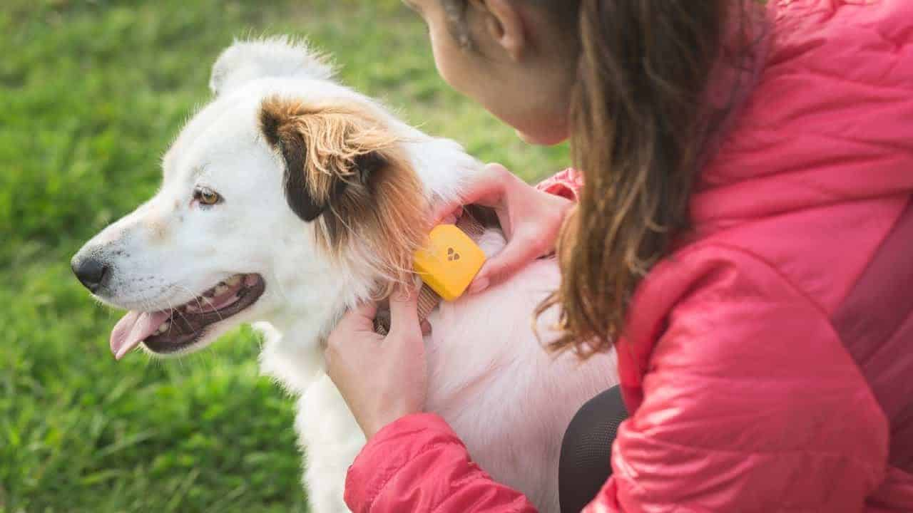 Findster Personal Pet Tracker