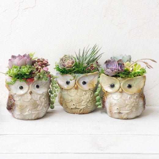 Woodland Owl Potted Plants