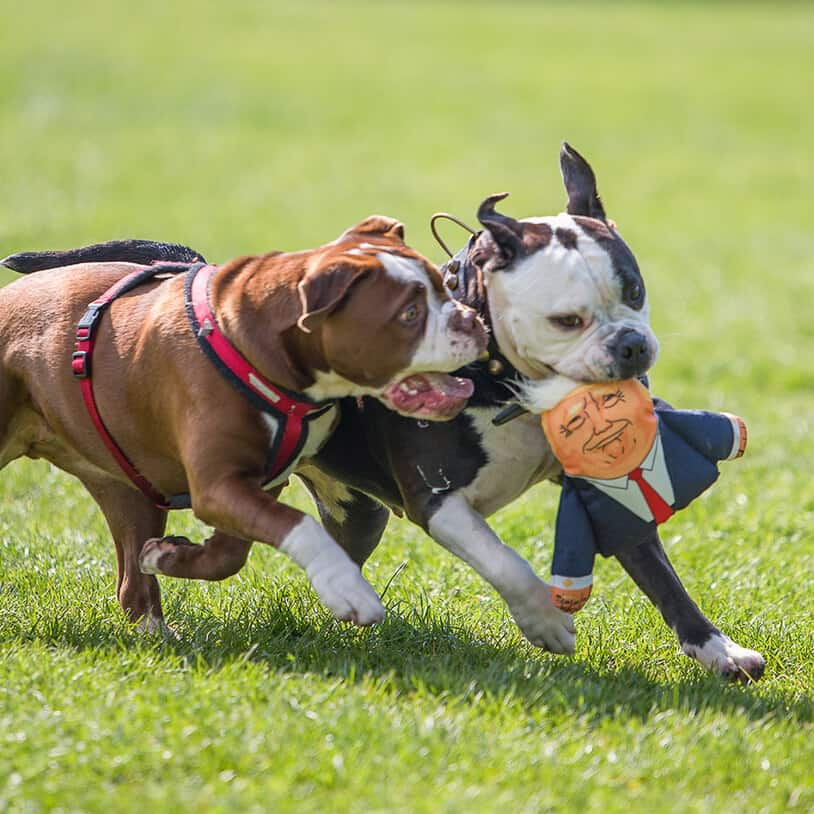 Funny Dog Hate Toys